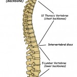 Help for chronic spinal curves?